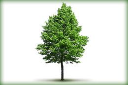 Prawidlowa-pielegnacja-drzew.jpeg